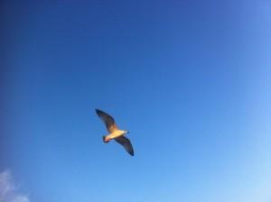 небо, чайка