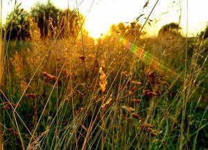 луч солнца, новый день, утро, доброе утро