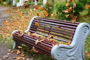осень, листопад